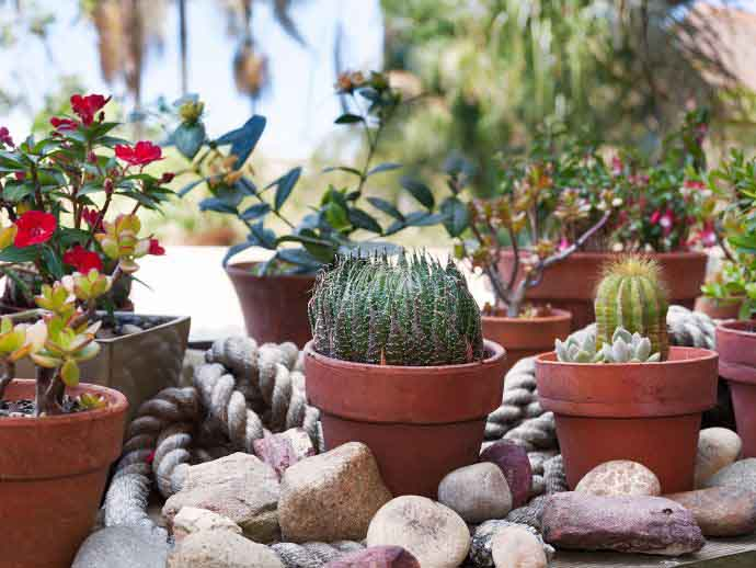 7 ways to cut down spending - cacti