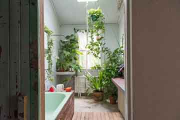 RAMS Talk image 1 bathroom with plants